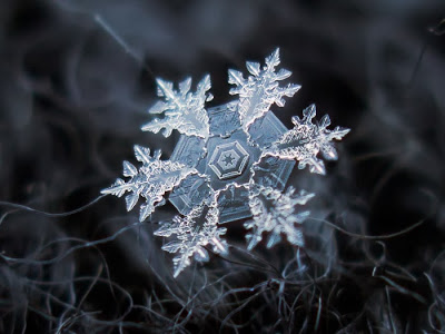 Nature's snowflakes, up close, are mind-blowing
