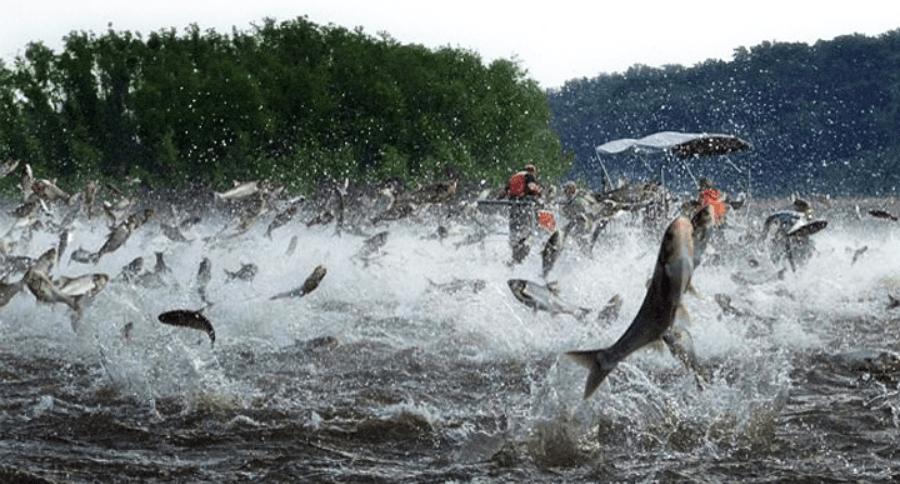 Saving Great Lakes from invasive species: Public, 350 ideas, Legislature, one bad idea